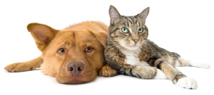 Remove Cat & Dog Urine Odors