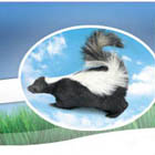 Remove Skunk Odors & Smells